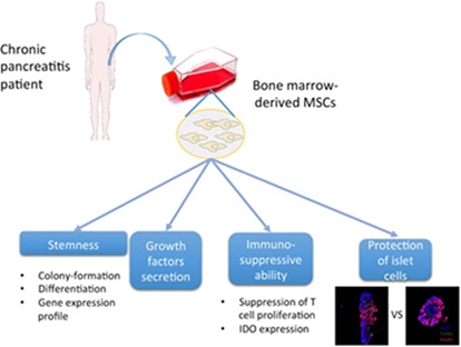 What S The Stem Cells Buzz This Week Craniofacial Bone