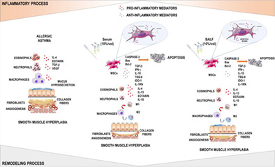 Potentiating The Therapeutic Activity Of Mesenchymal Stem